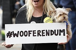 "© Licensed to London News Pictures. 07/10/2018. London, UK. Pro-remain dog owners march to Parliament to demand a ""People's Vote"" on the final Brexit agreement. Photo credit: Peter Macdiarmid/LNP"