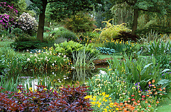 General view looking over the pond at Beth Chatto's garden