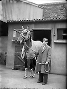 Grand National Winner 'Quare Times' arrives at North Wall from Aintree.29/03/1955