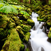 Creek flowing into the Sol Duc River of Washington's Olympic National Park.