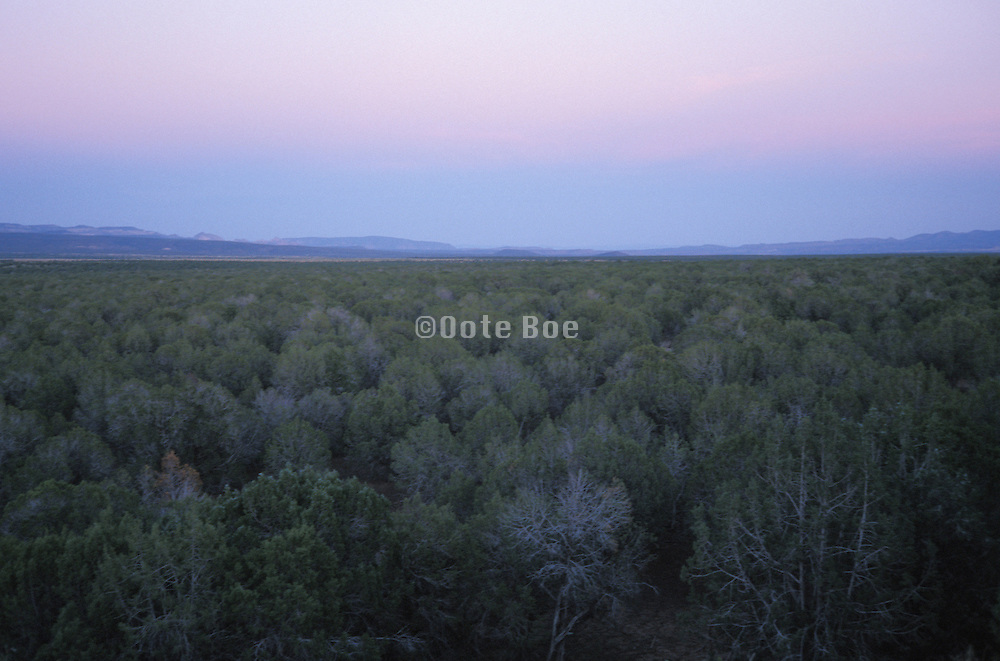 Overhead view of large forest Prescott National Forest Arizona US