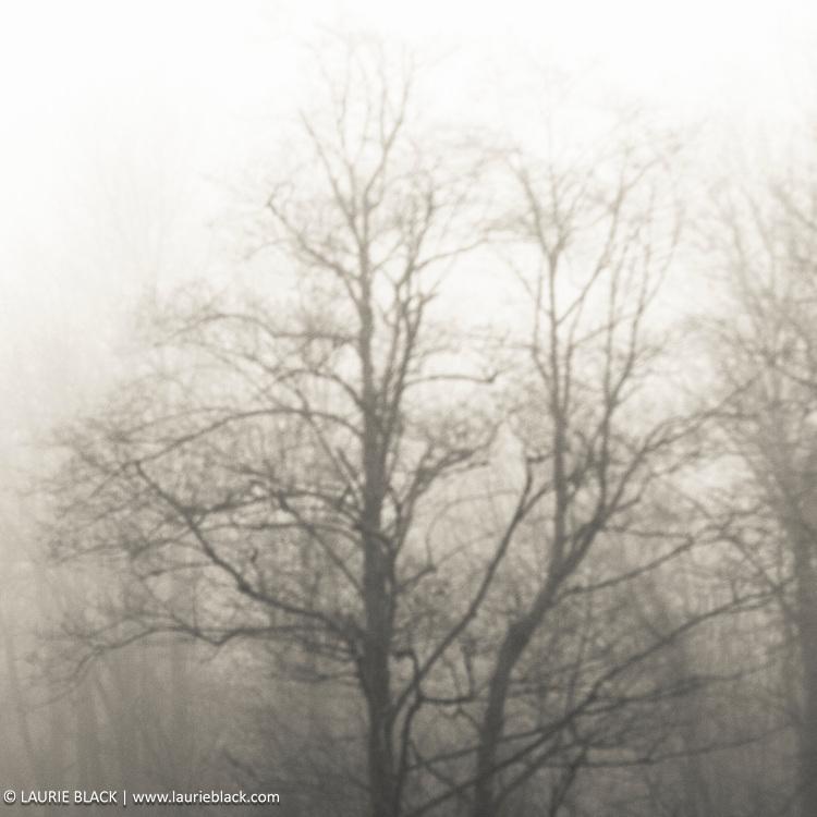 Misty Columbia Gorge landscape