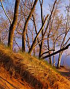 Cottonwoods and dune grass growing on perched dunes 450 feet above Lake Michigan, Sleeping Bear Dunes National Lakeshore, Michigan.