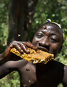 Collecting and eating honey comb and larvae from a beehive.