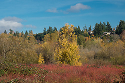 United States, Washington, Bellevue, Mercer Slough Nature Park