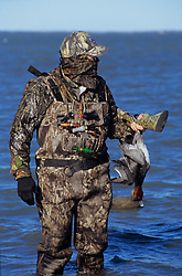 Stock photo of a man in camo carries his gun and a duck through the water