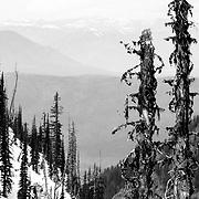 Treess in Glacier National Park.
