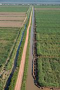Sugarcane production<br /> East GUYANA<br /> South America