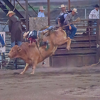 A bull rider gets bucked off his mount at the 2011 Bozeman Stampede in Bozeman, Montana.