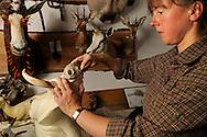 Taxidermist Claudia Gloeckner formed from clay the nose by a warthog-blank, By modeling clay will obtained the facial expressions of the animal. She is also a hunter. Taxidermist Claudia Gloeckner, Hopfgarten in Erzgebirge..Praeparatorin Claudia Gloeckner formt aus Ton die Nase an einem Warzenschwein-Rohling nach, durch das Modellieren mit Ton bleibt die Mimik des Tieres erhalten. Sie ist auch selbst Jaegerin, Tierpraeparation Claudia Gloeckner, Hopfgarten im Erzgebirge