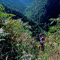PERU,  John Catto (MR), hacks through upper Amazon cloud forest enroute to cliff-side Chachapoyan (pre-Incan) tomb above Huabayacu River.
