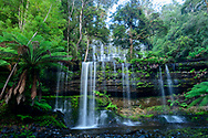 Oceania, Australia; Australian,  Tasmania; Central Highlands; Mount Field National Park; Russel Falls;