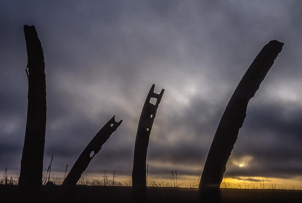 Whale bones at sunset, Mechigmen Archeological Site, Chukotsk Peninsula, NE Russia, 1992
