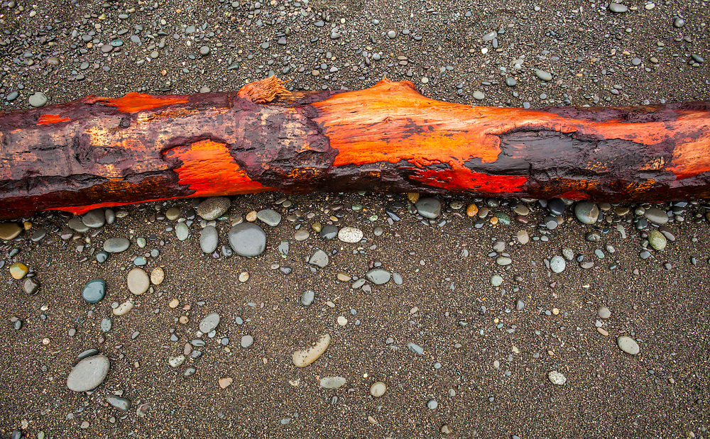Red alder tree washed up on Rialto Beach. Yes that is the real color  :-) I always find it stunning.