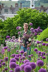 Tom Brown, head gardener, by the allium trial at Parham House
