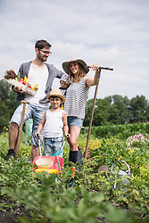 Family harvesting vegetables in community garden, Bavaria, Germany
