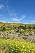 Foothills of the Santa Ana Mountains in Irvine Regional Park