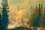 Morning fog rising above a creek in the boreal forest. <br />