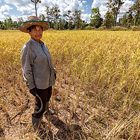 Pare's mother taking a short break on her rice field.