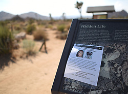 August 4, 2017 - A missing persons flyer is placed on a map of Joshua Tree inside Joshua Tree National Park in Joshua Tree, Calif., Friday, August 4, 2017. California State University Fullerton students, Rachel Nguyen and Joseph Orbeso have been missing for two weeks in the park. (Credit Image: © Steven K. Doi via ZUMA Wire)