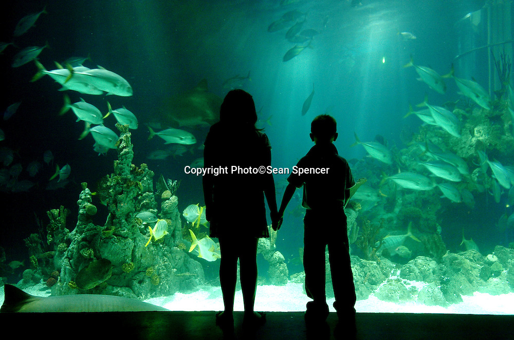 A young boy and girl look at fish in the aquarium, The Deep...Picture:Sean Spencer/Hull News & Pictures 01482 210267/07976 433960..High resolution picture library at http://www.hullnews.co.uk..©Sean Spencer/Hull News & Pictures Ltd..NUJ recommended terms & conditions apply. Moral rights asserted under Copyright Designs & Patents Act 1988. Credit is required. No part of this photo to be stored, reproduced, manipulated or transmitted by any means without permission. ..