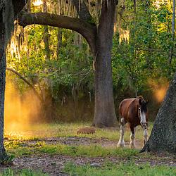 Horse Ocala Florida