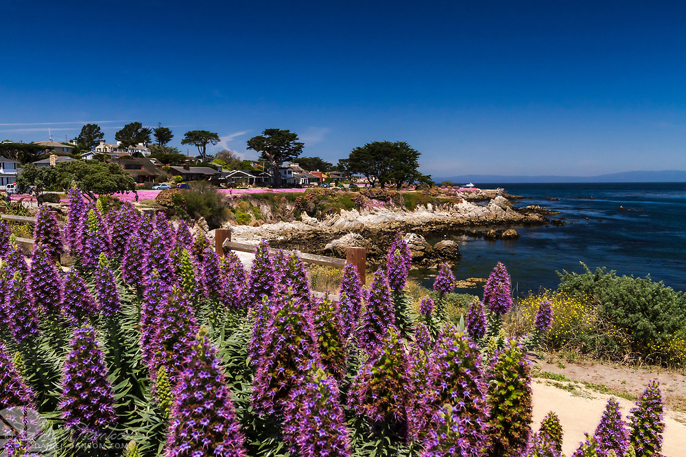Shoreline view of Pacific Grove, California near Lovers Point, from the walking trail.