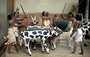 Herding cattle. Ancient Egyptian tomb model. Cairo Museum, Egypt