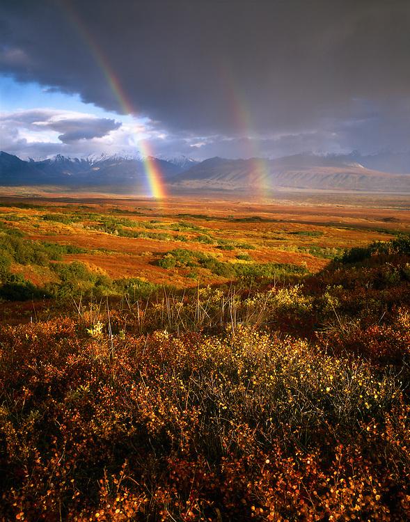 USA, Alaska, Denali NP, Incredible double rainbow at sunset as viewed from the tundra looking towards the Alaska Range