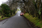 Images of Dark Hedges on the Bregagh Road. The location has been used in the  Game of Thrones TV series.