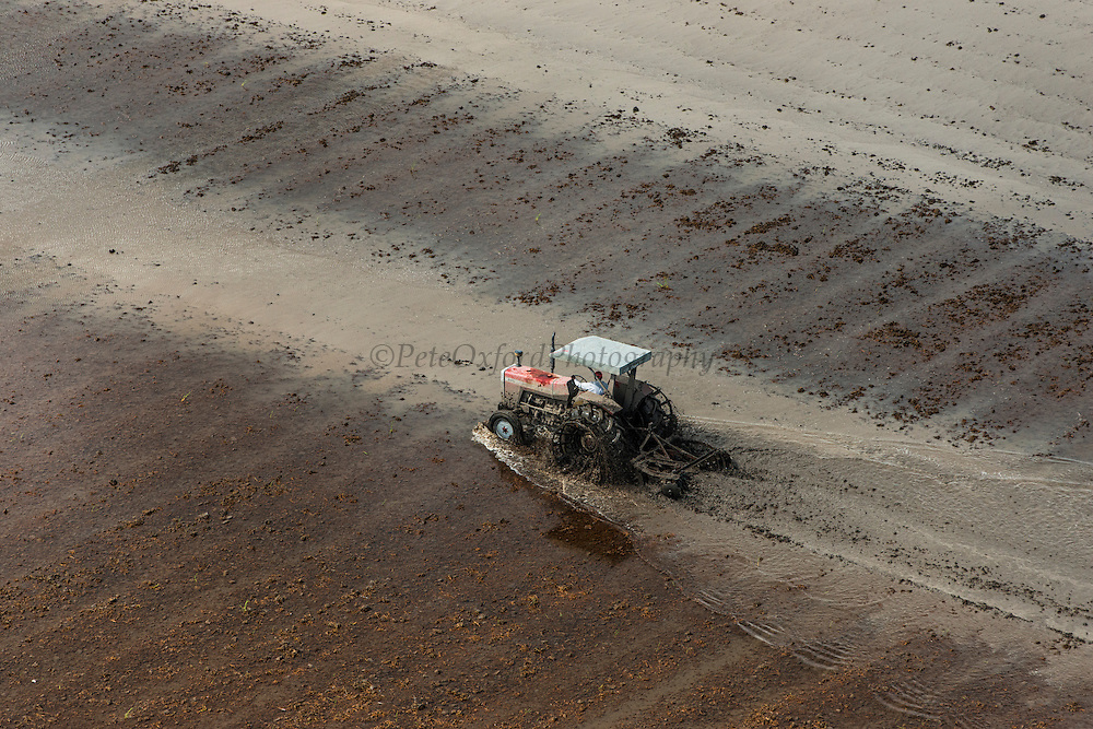 Tractor<br /> Rice production<br /> Coastal area<br /> GUYANA<br /> South America