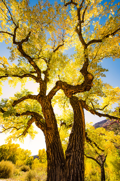 Autumn in the Jemez, Jemez Springs, New Mexico