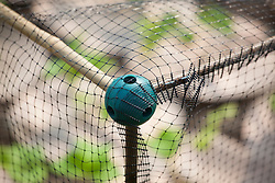 Detail of rubber ball system to create cane structure for supporting plastic netting