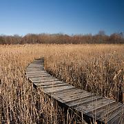 Boardwalk through the marsh grasses at Hellcat Swamp, Parker River National Wildlife Refuge, Newbury, MA