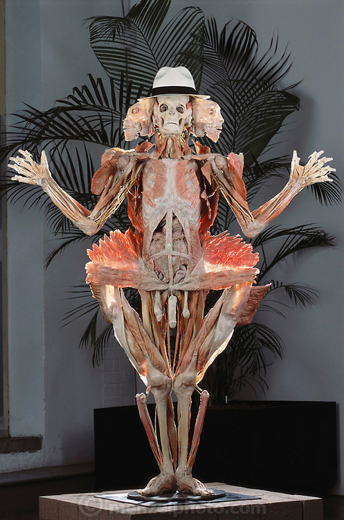 """The """"Winged Man,"""" a piece from Gunther von Hagens' Body Worlds exhibit. Body Worlds is a traveling exhibit of real, plastinated human bodies and body parts. Von Hagens invented plastination as a way to preserve body tissue and is the creator of the Body Worlds exhibits.  [2002]"""