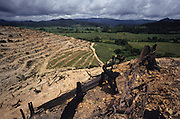 PLANTATIONS, CASH CROPS,  MALAYSIA, South East Asia. Tropical primary rainforest and one of the world's richest, oldest eco-systems, flora and fauna, under threat from development, cash crops and plantations, logging and deforestation. Home to indigenous Orang-Asli native tribal peoples.  World Bank project.