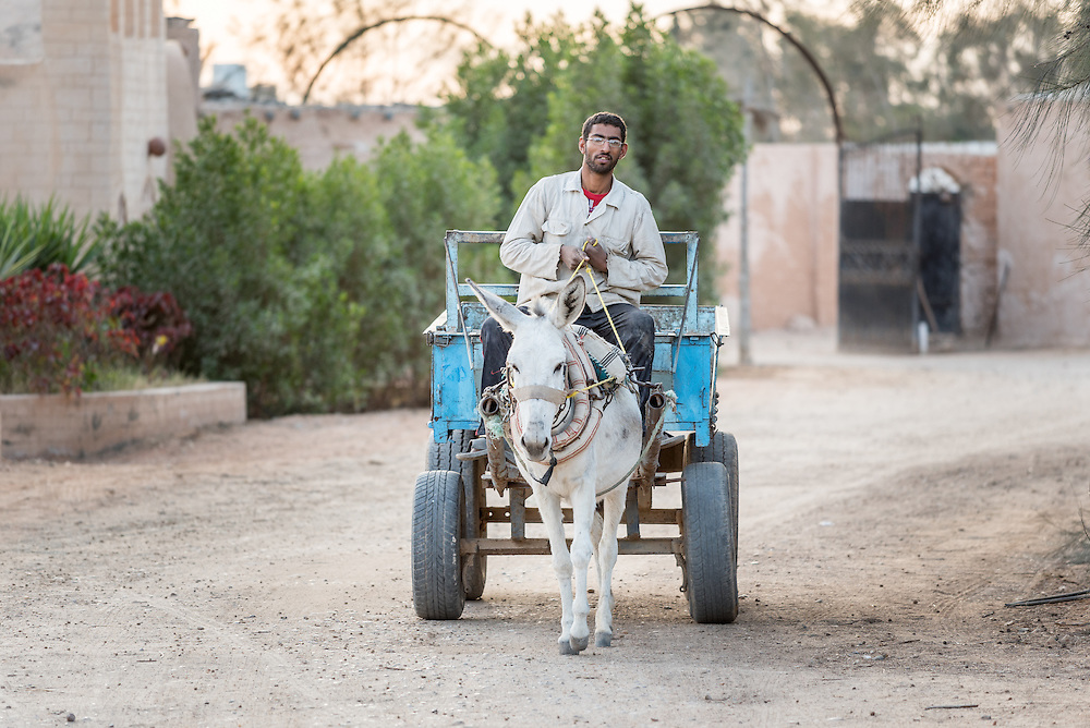 16 December 2016, Cairo, Egypt: A young man rides a carriage pushed ahead by a donkey, at the Anaphora Institute, a Coptic Orthodox retreat and educational centre located north-west of Cairo.
