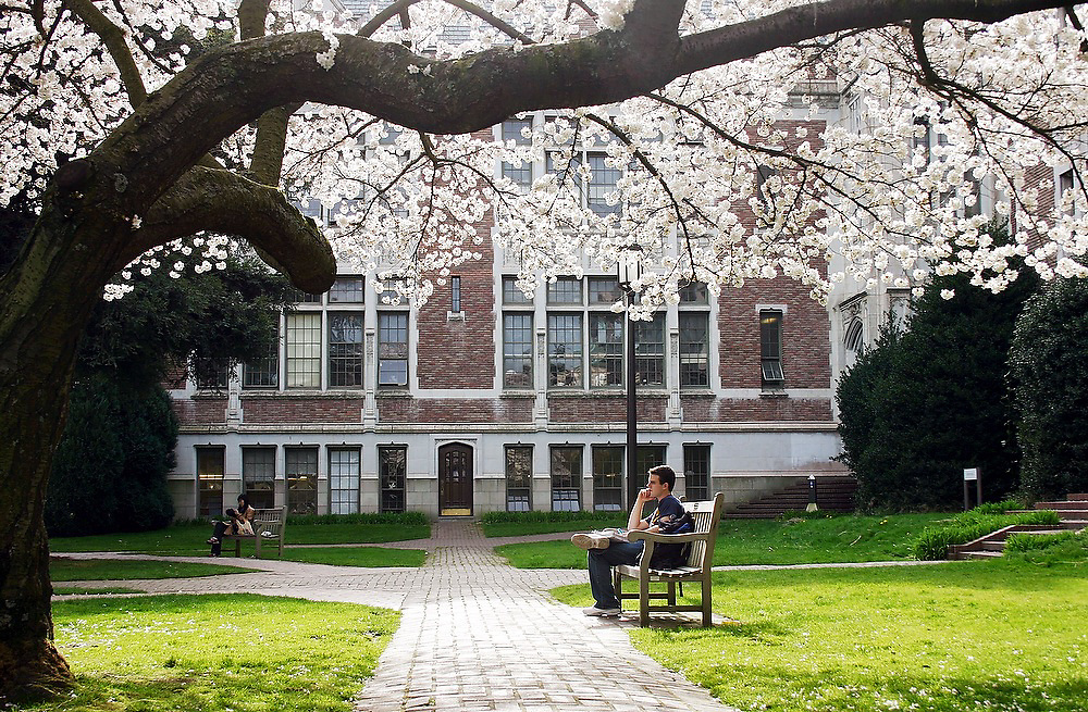 A student deep in though sitting on a bench below a blooming cherry tree at the Quad on the University of Washington campus in Seattle, Washington.