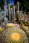 Rio de Janeiro_RJ, Brasil...Cacto no Jardim Botanico do Rio de Janeiro...The Cactus in the Botanical garden in Rio de Janeiro..Foto: JOAO MARCOS ROSA / NITRO