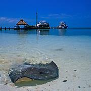 Stingray at Isla Contoy. Quintana Roo, Mexico.