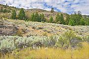 Sagebrush in Antelope-brush ecosystem. Okanagan Valley. , Osoyoos, British Columbia, Canada