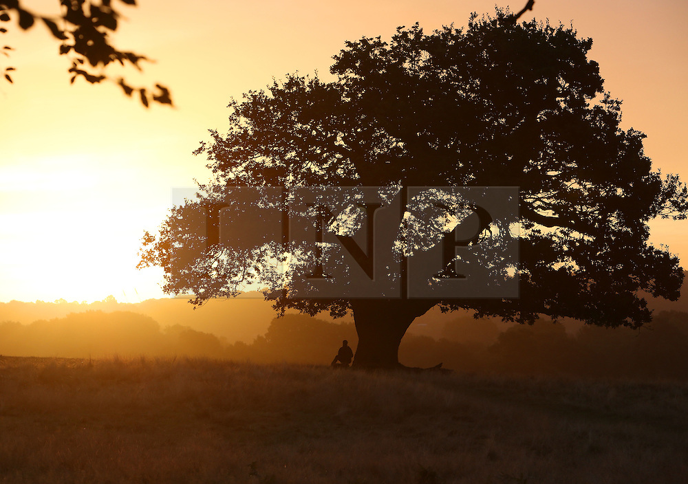 © Licenced to London News Pictures. 28/09/2016. London. UK.  <br /> A photographer is pictured under a tree at dawn in Richmond Park in London, September 28th 2016.<br /> Photo Credit: Susannah Ireland