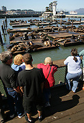 SAN FRANCISCO Sea Lions at Pier 39.