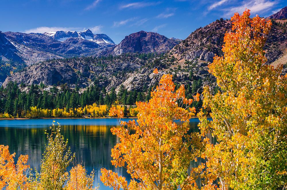Golden fall aspen at June Lake, Inyo National Forest, Sierra Nevada Mountains, California