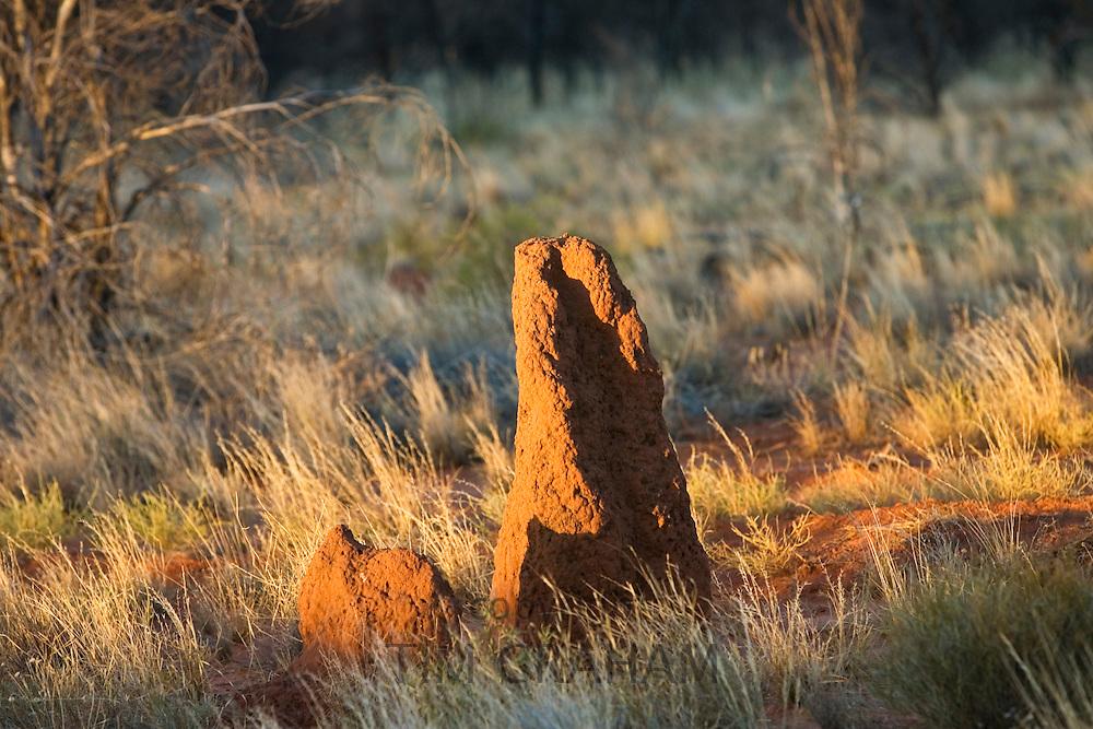 Termite mound at Simpson's Gap, West Madonnell Mountain Range, Australia