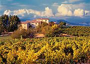 An autumn vineyard surrounds a local estate below Bonnieux, in Provence, France