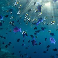 MD, Maldives