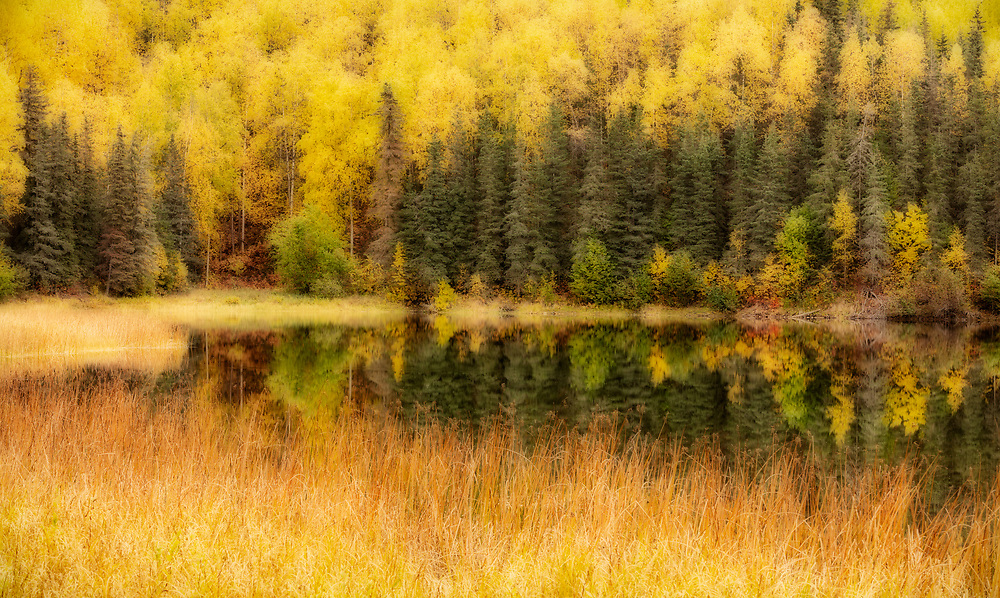 Orton Effect of fall colors along Gwen Lake near Eagle River in Southcentral Alaska. Afternoon.