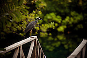 A bird sits atop the railing of a small walking bridge in a forest near the coast of the Dominican Republic.