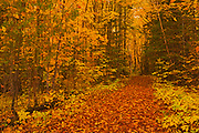 Path in the Acadian forest in autumn foliage. <br />Aroostook<br />New Brunswick<br />Canada